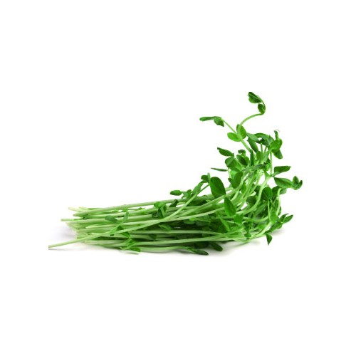 Sprouts, Snowpea, punnet