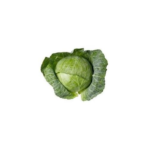 Cabbage, Standard